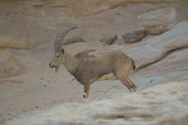 Nature Reserve Wadi Mujib