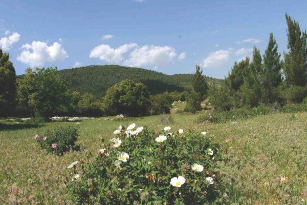 Nature Reserves Dibeen