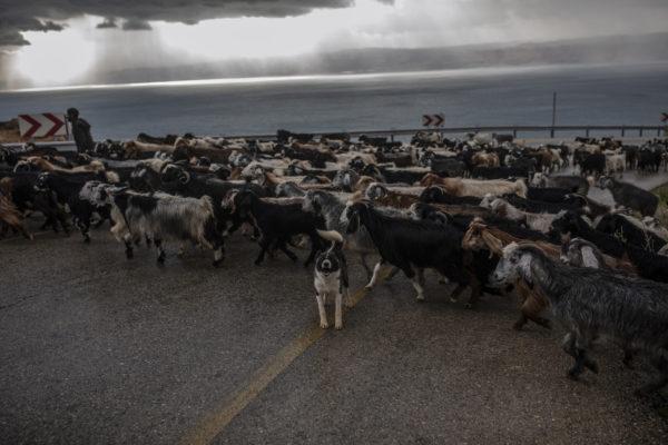 Shepherd by Muheisen